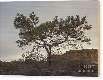 Torrey Pine Tree Wood Print by Darleen Stry
