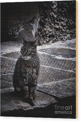 Tortishell Cat Wood Print