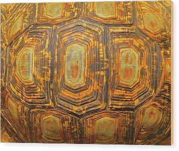 Tortoise Abstract Wood Print by Ramona Johnston