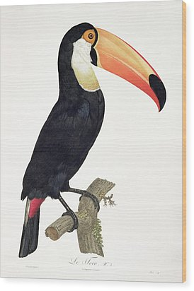 Toucan Wood Print by Jacques Barraband