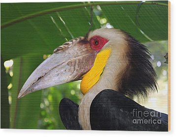 Wood Print featuring the photograph Toucan by Sergey Lukashin