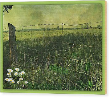 Touch Of Daisies  Wood Print by Dianne  Lacourciere