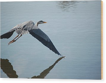 Touch The Water With A Wing Wood Print by Randy J Heath