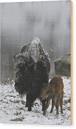 Wood Print featuring the photograph Toughing It Out by Gary Hall