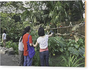 Tourists Viewing The Colorful Birds Wood Print by Ashish Agarwal