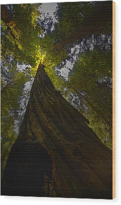Towering Giants Wood Print