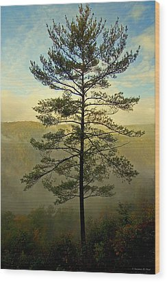 Towering Pine Wood Print