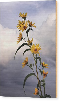 Wood Print featuring the photograph Towering Sunflowers by Rob Graham