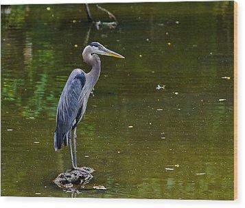 Towpath Heron Wood Print