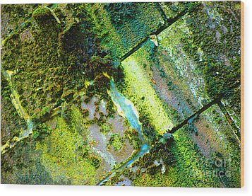 Wood Print featuring the photograph Toxic Moss by Christiane Hellner-OBrien