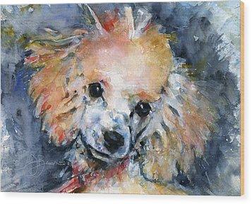 Toy Poodle Wood Print by John D Benson
