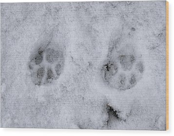 Traces Of A Cat In The Snow Netherlands Wood Print by Ronald Jansen