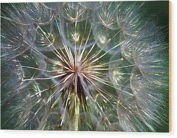 Wood Print featuring the photograph Tragopogon Dubius Yellow Salsify Flower Fruit Seed by Karon Melillo DeVega