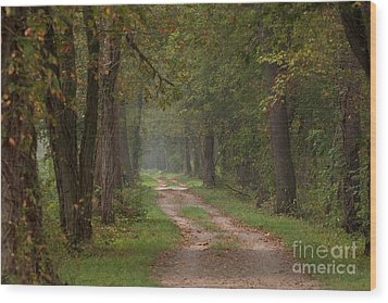 Trail Along The Canal Wood Print by Jeannette Hunt