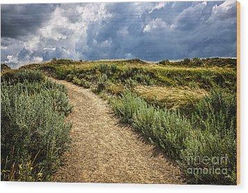 Trail In Badlands In Alberta Canada Wood Print by Elena Elisseeva