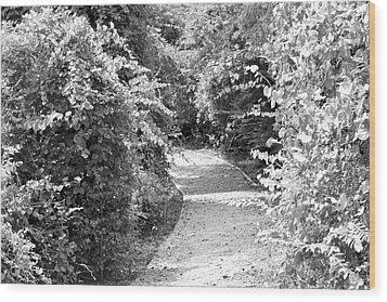 Trail In Black And White Wood Print by Carolyn Ricks