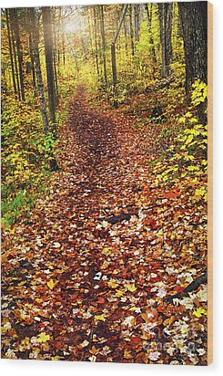Trail In Fall Forest Wood Print by Elena Elisseeva
