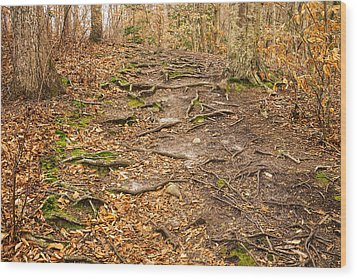 Trail In Ryder Conservation Land Wood Print by Frank Winters