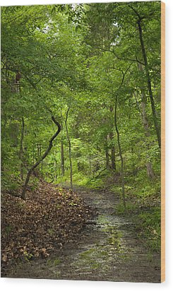 Trail Of Tears Mantle Rock Entrance Wood Print by Lena Wilhite