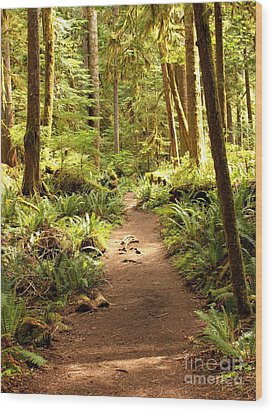 Trail Through The Rainforest Wood Print by Carol Groenen