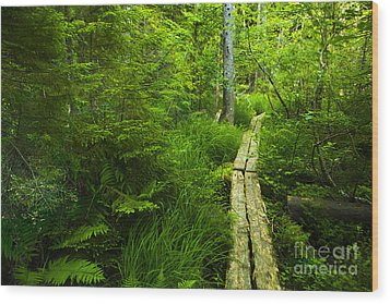 Trail Through The Woods Wood Print