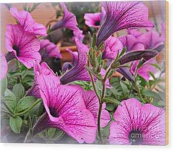 Wood Print featuring the photograph Trailing Petunias by Clare Bevan
