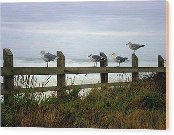 Trained Gulls Wood Print by John  Greaves