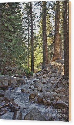 Tranquil Forest Wood Print by Peggy Hughes