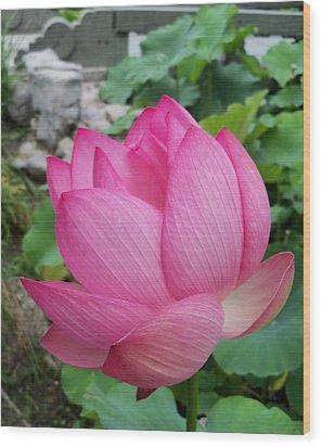 Tranquil Lotus  Wood Print by Lingfai Leung