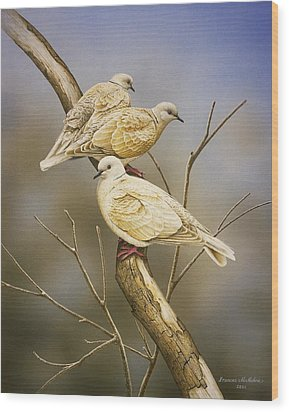 Tranquillity - Ring-necked Doves Wood Print by Frances McMahon