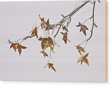 Wood Print featuring the photograph Transition by Sherri Meyer