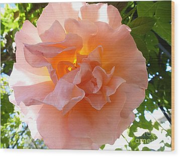 Transparent Beauty  Wood Print by Anat Gerards