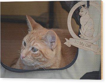 Traveling Cat - Orange Tabby Wood Print