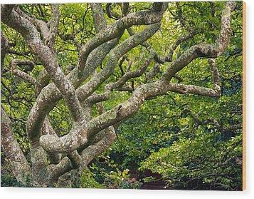 Tree #1 Wood Print