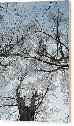 Wood Print featuring the photograph Tree 2 by Minnie Lippiatt