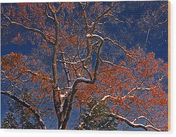 Wood Print featuring the photograph Tree Against Dark Sky by Andy Lawless