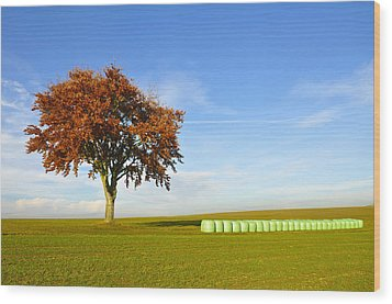 Tree And Hay Bales Wood Print by Aged Pixel