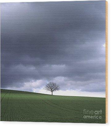 Tree And Stormy Sky  Wood Print by Bernard Jaubert