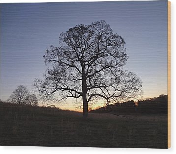 Wood Print featuring the photograph Tree At Dawn by Michael Porchik
