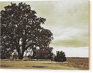 Tree At End Of Runway Wood Print