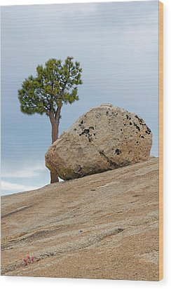 Tree At Olmsted Point Yosemite National Park California Wood Print by Christine Till