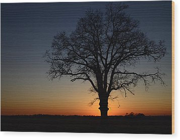 Wood Print featuring the photograph Tree At Sunset by Michael Donahue