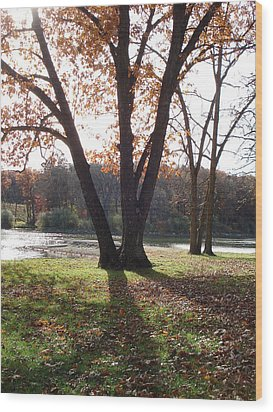 Wood Print featuring the photograph Tree At The Lake by J L Zarek