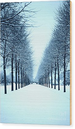 Tree Avenue In Snow Wood Print