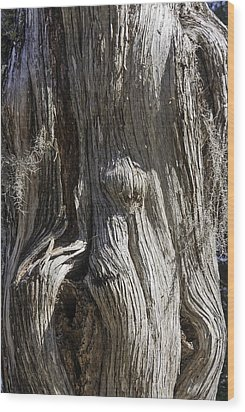 Tree Bark No. 3 Wood Print by Lynn Palmer