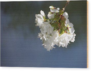 Wood Print featuring the photograph Tree Blossoms by Marilyn Wilson