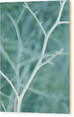 Tree Branches Abstract Turquoise Wood Print by Jennie Marie Schell