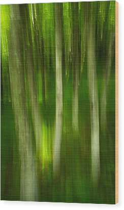Wood Print featuring the photograph Tree Canopy by Serge Skiba