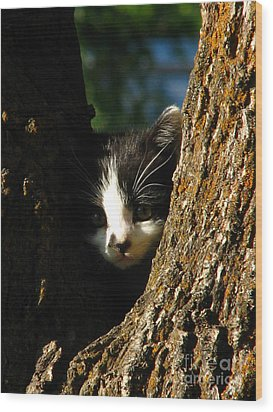 Tree Cat Wood Print by Greg Patzer