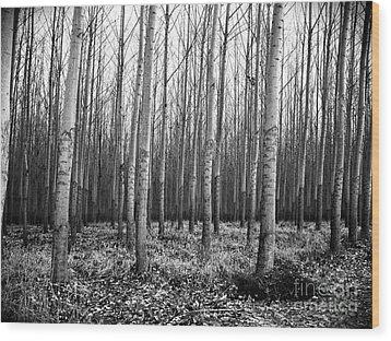 Tree Farm Wood Print by Chalet Roome-Rigdon